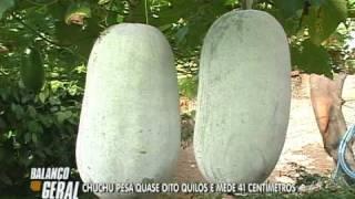 getlinkyoutube.com-CHUCHU GIGANTE EM UBERLÂNDIA