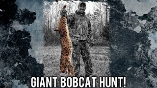 Giant Bobcat Hunt!