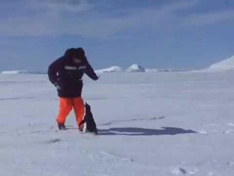 Pingvin napada!