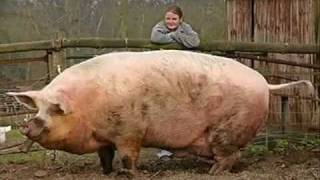 getlinkyoutube.com-Os animais mais estranhos do mundo e grandes curiosidades