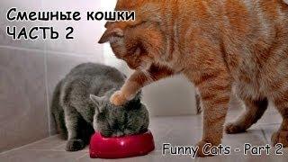 getlinkyoutube.com-Смешные кошки #2 - подборка 2013