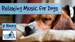 OVER 8 HOURS of Relaxing Music for Dogs and Puppies! Calm Down Stressed or Anxious Dogs and Puppies