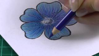 getlinkyoutube.com-Colouring technique with coloured pencils flowers