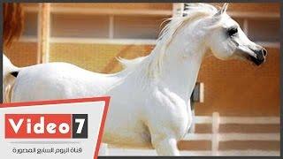 getlinkyoutube.com-شاهد مسابقة جمال الخيول العربية الاصيلة