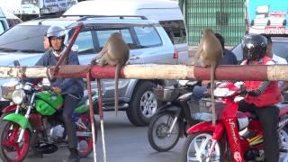 getlinkyoutube.com-รถไฟผ่านลพบุรี ลิงเล่นไฟแดง Lopburi train