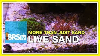 getlinkyoutube.com-Week 12: Proof: Live Sand isn't as dull as you thought! | 52 Weeks of Reefing #BRS160