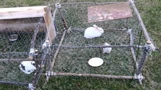 getlinkyoutube.com-Rabbit Hutch Under $5