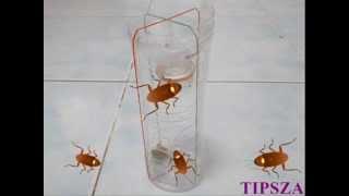 getlinkyoutube.com-วิธีกําจัดแมลงสาบง่ายๆ แต่ได้ผลดีมาก  How to kill roaches.