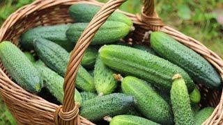 Пять основных причин потери урожая