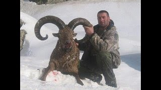 getlinkyoutube.com-Hunting in Azerbaijan GLOBAL SAFARI AZERBAIJAN