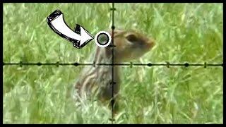 getlinkyoutube.com-Is this a Killshot?