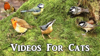 getlinkyoutube.com-Bird Sounds for Cats Extravaganza : Videos for Cats to Watch -  Birds in The Secret Forest