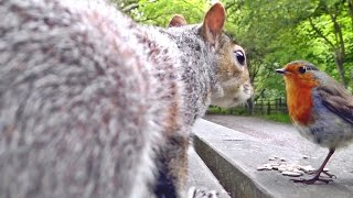 getlinkyoutube.com-Videos For Cats To Watch - Squirrels, Robin and Great Tit Birds