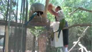 Don't get Bitten/Get bedding in Macaw nest box p2