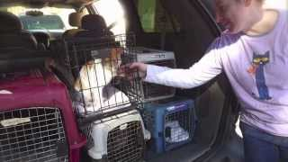 flushyoutube.com-Furkids/SmallDog Rescue saves 54 cats and dogs in 2 days!