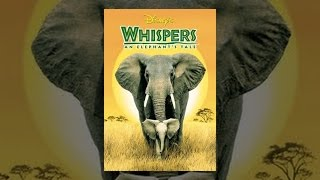 getlinkyoutube.com-Whispers: An Elephant's Tale