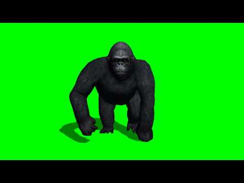 King Kong Gorilla walk - green screen effects