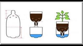 getlinkyoutube.com-Tutorial Hidroponik Sistem Sumbu Botol Bekas (HIdroponik Wick System Sederhana)