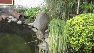 getlinkyoutube.com-Le jardin et bassin japonais de Stafsan