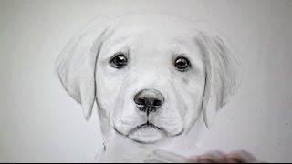 getlinkyoutube.com-Comment dessiner un chien [Tutoriel]