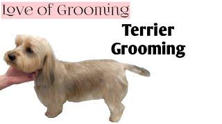 getlinkyoutube.com-Grooming  a Terrier Mix