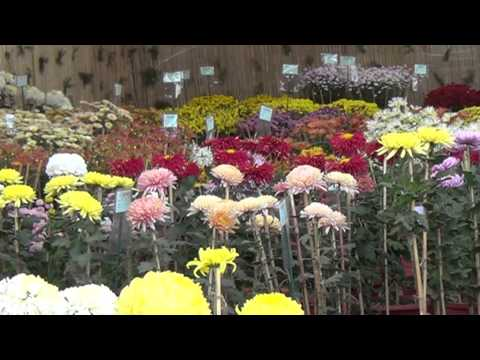 Flower show at the Terraced Gardens in Sector 33, Chandigarh Part-2