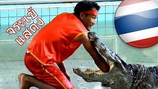 getlinkyoutube.com-CROCODILE Show - Thailand
