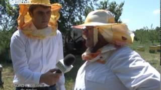 getlinkyoutube.com-REPORTAJ VIDEO - Prisaca de la poezie la afacere