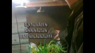 getlinkyoutube.com-зелень