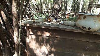 getlinkyoutube.com-Metal Detecting! - Found a treasure trove in the woods!