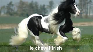 getlinkyoutube.com-toutes les races de chevaux
