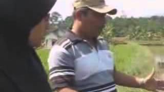Pembudidayaan Ikan Lele di Kabupaten Pekalongan