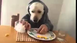 Funny Dog Eating With Hands