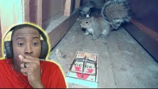 getlinkyoutube.com-Squirrel vs Mouse Trap REACTION SCARY PRANK!!