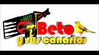 getlinkyoutube.com-beto y sus canarios mix