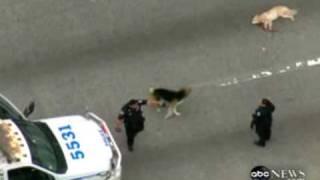 getlinkyoutube.com-Amazing dog video - dog saves a friend dog on highway