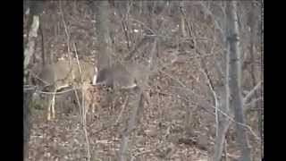 getlinkyoutube.com-AWSOME Shoots 2 BUCKS IN 5 SECONDS Dropped in tracks 12 gage Rmington 870 MARYLAND Whitetail Deer