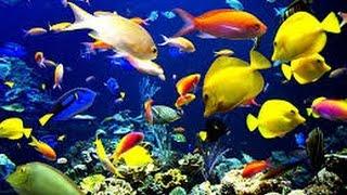 घर में एक्वेरियम(aquarium) रखने का सही तरीका और उन्हें रखे मछलियों के बारे में जाने