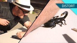 getlinkyoutube.com-Getting Stung by a Scorpion. In Slow Motion!