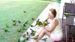 getlinkyoutube.com-Feeding the Birds