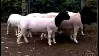 getlinkyoutube.com-Globo Rural