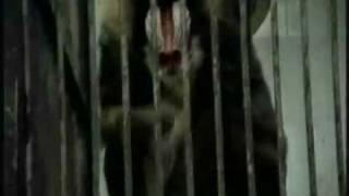 U Skripcu - Nove Godine - originalni spot iz 1983. godine