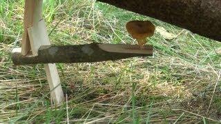 getlinkyoutube.com-Уроки выживания в лесу  ловушка 3