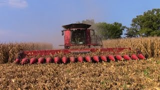 getlinkyoutube.com-Two Case IH 9240 Combines with 4416 16 row Corn Heads
