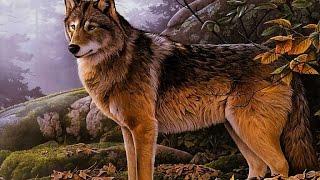 getlinkyoutube.com-Канал wolf Tv [обзор#18]