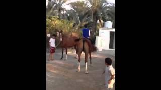 getlinkyoutube.com-الحصان العنيد
