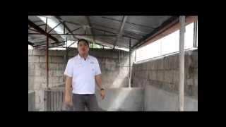 getlinkyoutube.com-Proper Housing for Pigs -Tamang Sukat ng Kulungan- B-MEG Premium Hog Raising