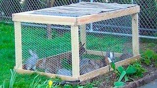 getlinkyoutube.com-Строим летнюю клетку для мелких животных своими руками за 15 минут! Кролиководство