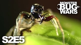 getlinkyoutube.com-MONSTER BUG WARS | Murderous Intent | S2E5