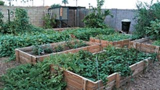 getlinkyoutube.com-Secrets to a successfull urban garden with little work.